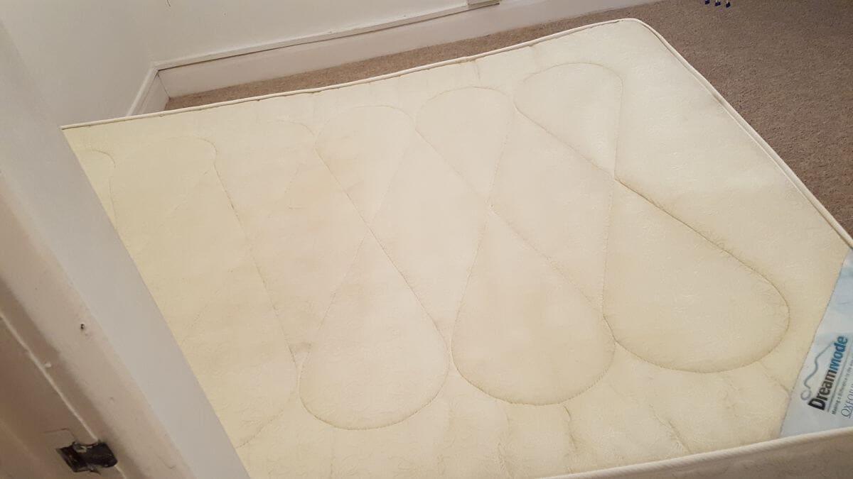 carpet washer HP1
