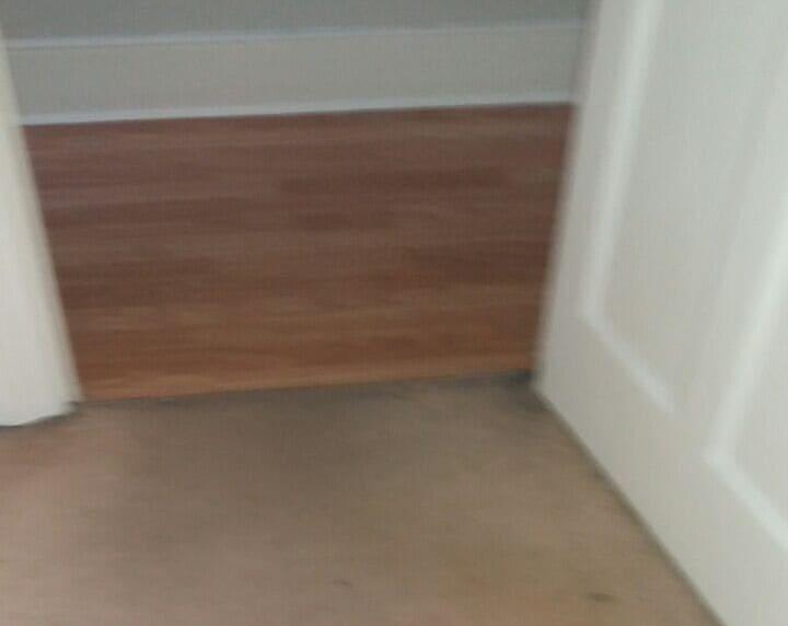 floor cleaners Petersham