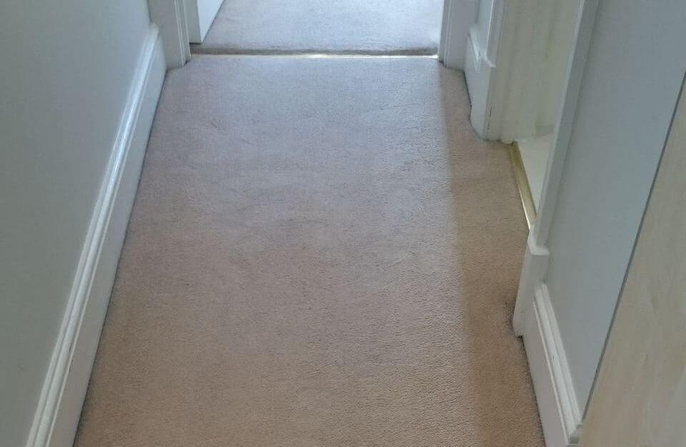clean a carpet Balham